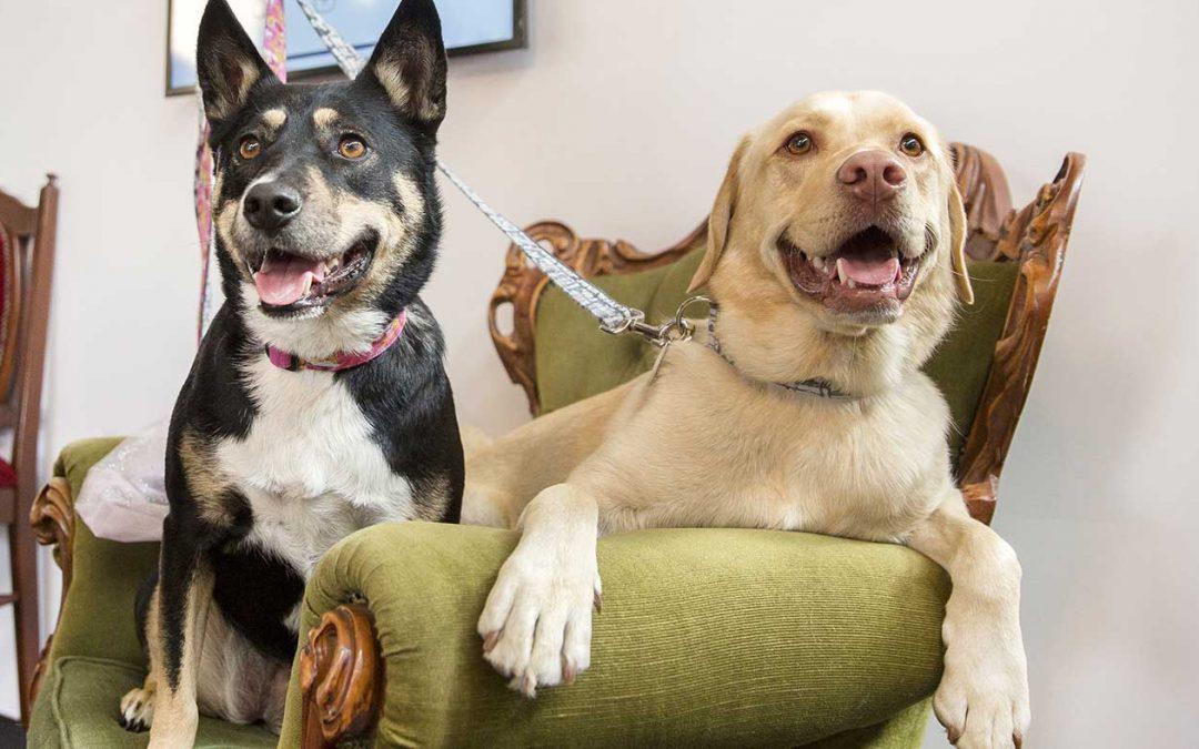 ADT dá dicas de segurança para pets que ficam sozinhos