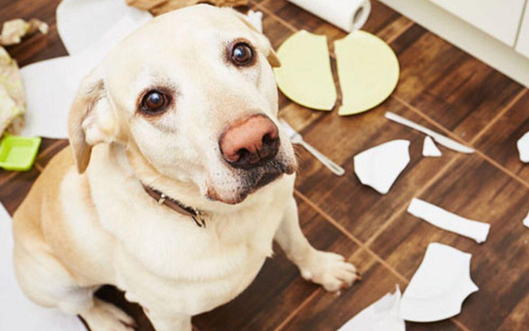 Como deixar o seu animal de estimação protegido ao sair de casa